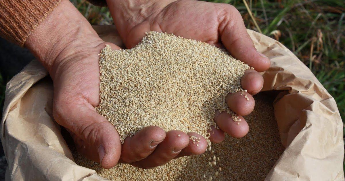 quinoa-4.jpg